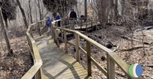 Raised Boardwalk through forest